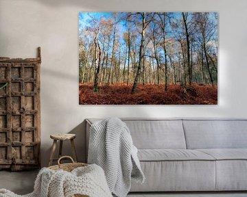 Witte berken in het Grebbebos in de herfst van Dennis van de Water