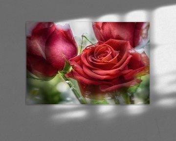 Rode rozenblaadjes in het zonlicht van Nicc Koch