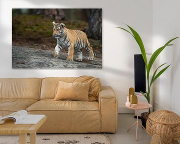 Koenigstiger ( Panthera tigris ), Jungtier von wunderbare Erde