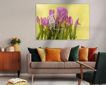 Krabbenspinne (Misumena vatia) im Blumenbouquet von wunderbare Erde