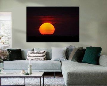 Kraniche (Grus grus) im Flug vor der untergehenden Sonne von wunderbare Erde