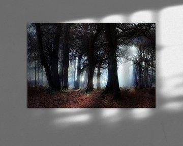 Blauw licht in het donkere bos von Dennis van de Water