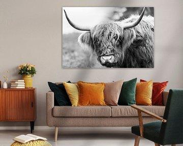 Portrait eines schottischen Hochlandviehs von Sjoerd van der Wal