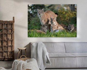 Eurasischer Luchs ( Lynx lynx ), die ganze Familie... von wunderbare Erde