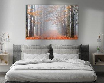 Oranje boslaan in de herfst von Dennis van de Water