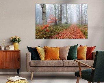 Mistige wandeling in de herfst door het bos van Dennis van de Water