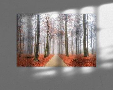 Fietspad door het Edese bos in de herfst van Dennis van de Water