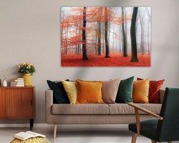 Oranje mist in het Edese bos von Dennis van de Water