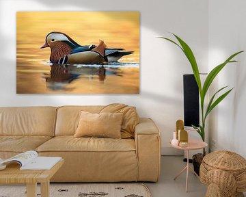 Mandarin Duck ( Aix galericulata ), colorful drake in breeding dress van wunderbare Erde