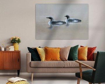 Prachttaucher ( Gavia arctica ) auf einem See in Schweden sur wunderbare Erde