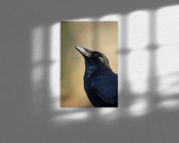 Rabenkrähe ( Corvus corone ), Portraitaufnahme von wunderbare Erde