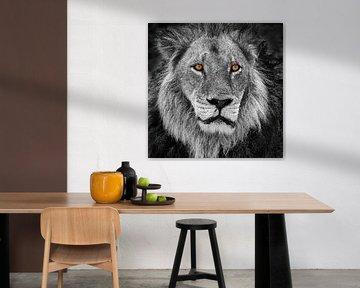 Portrait d'un lion en noir et blanc avec des yeux orange sur Chris Stenger