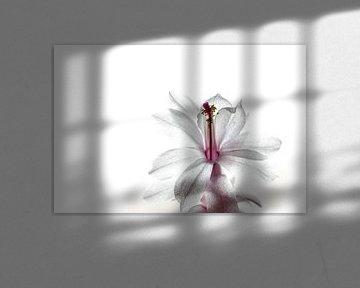 Kaktusblume von Helga van de Kar