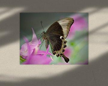 Schmetterling Macro von Dick Besse