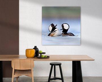 Baltsende Kuifzaagbekken van AGAMI Photo Agency