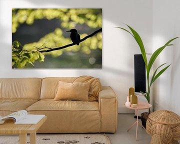 IJsvogel silhouet van IJsvogels.nl - Corné van Oosterhout