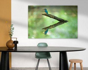 IJsvogel reflectie van IJsvogels.nl - Corné van Oosterhout