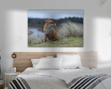 Fuchs ( Vulpes vulpes ) sitzt auf einem Hügel über einem Fluss und schaut sich um von wunderbare Erde
