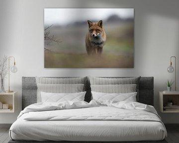 Fuchs ( Vulpes vulpes ) im Winterfell kommt einen Hügel hoch von wunderbare Erde