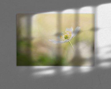Frühlingsgefühle von Birgitte Bergman