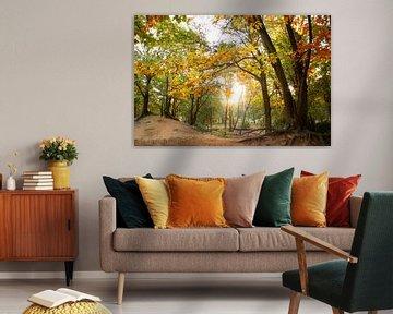 Herfstkleuren van Milou VDB