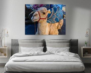 Marokkanisches Kamel von brava64 - Gabi Hampe