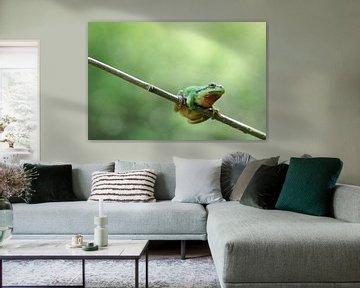 Macro - Kermit von Angelique Brunas