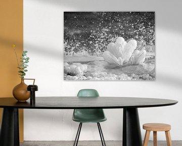 Bevroren bloem van Martijn Tilroe