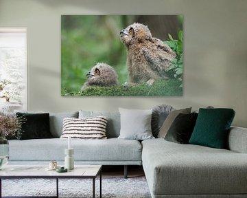 Europäische Uhus ( Bubo bubo ), zwei Jungvögel sitzen zusammen auf dem Waldboden von wunderbare Erde