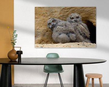 Europaeische Uhus ( Bubo bubo ), zwei Jungvögel am Eingang zu ihrer Nisthöhle von wunderbare Erde