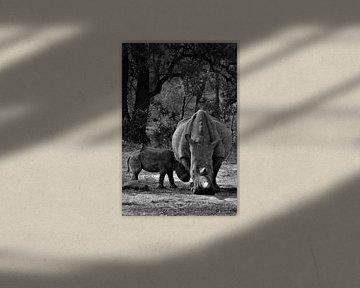 neushoorn en baby van Christiaan Van Den Berg