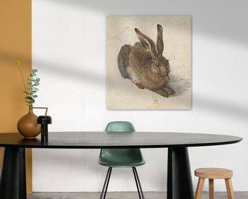 Hare, Albrecht Dürer