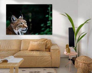 Rode Lynx von Mark Lenoire