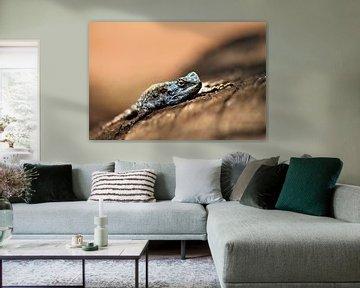 Eidechse in Afrika von Christiaan Van Den Berg