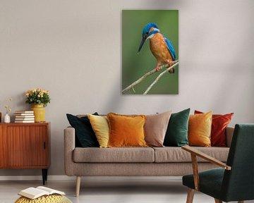 Eisvogel von IJsvogels.nl - Corné van Oosterhout