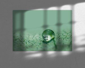 Tropfen im Grün von Caroline Lichthart