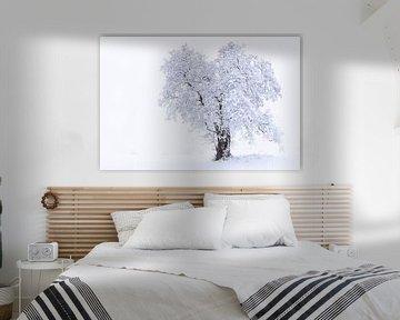 The tree van Tilo Grellmann | Photography