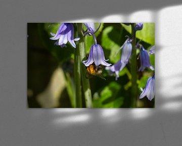 Gutes Essen aus dem Honig in der Blüte von Dany Tiels