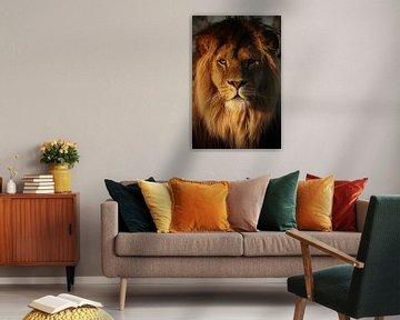 Lion in the evening sun von Tazi Brown