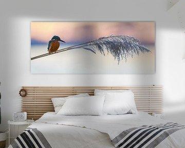 Eisvogel panorama von IJsvogels.nl - Corné van Oosterhout
