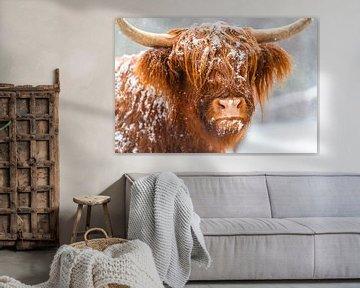 Porträt eines schottischen Hochlandviehs im Schnee von Sjoerd van der Wal