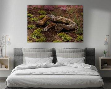 Waldspaziergang von Dirk Herdramm