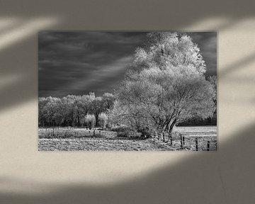 Nach einem Schneeschauer. von Tonny Eenkhoorn- Klijnstra