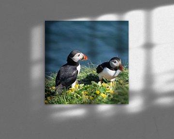 Papegaaiduikers op Staffa, Schotland von Erik Snoey