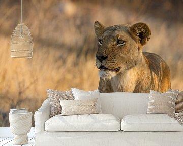 Leeuwin op jacht in afrika van Discover Dutch Nature
