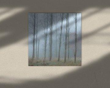 Bomen in de mist.