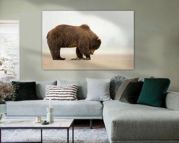 Alaska Bruine Beer (Ursus arctos gyas) von AGAMI Photo Agency