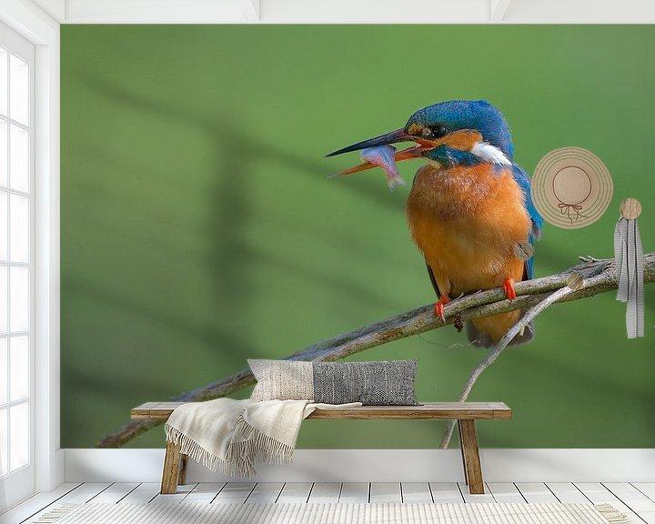 Sfeerimpressie behang: IJsvogel met vangst van IJsvogels.nl - Corné van Oosterhout