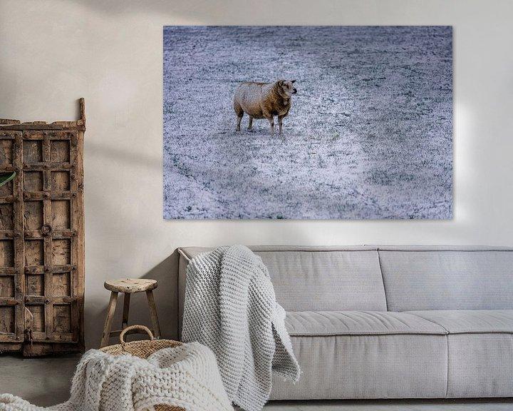Impression: Schaap in winter op Texel sur Texel360Fotografie Richard Heerschap