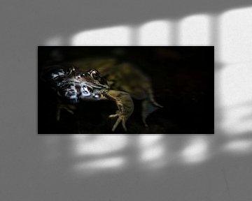 Frog with bubbles von Sense Photography